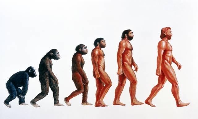 ewolucja_czlowieka.jpg