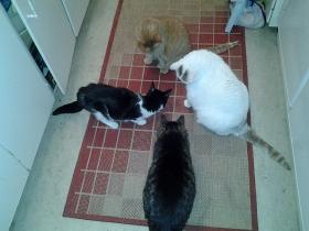 Cztery koty