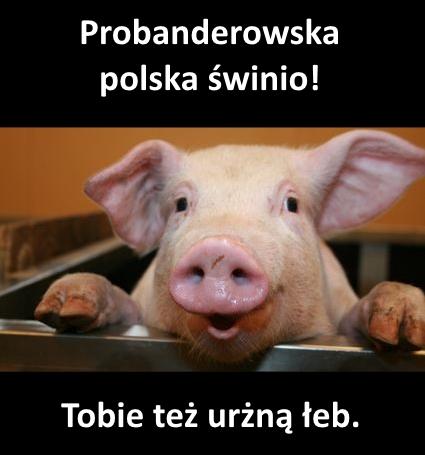 poska swinia