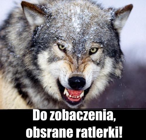 Wilk zly