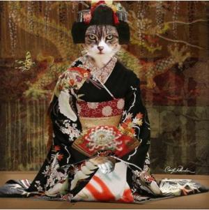 kot w kimono