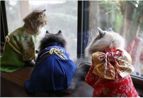 koty w kimono